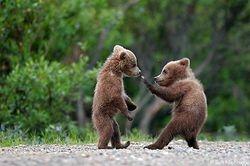Kids Fight!!!
